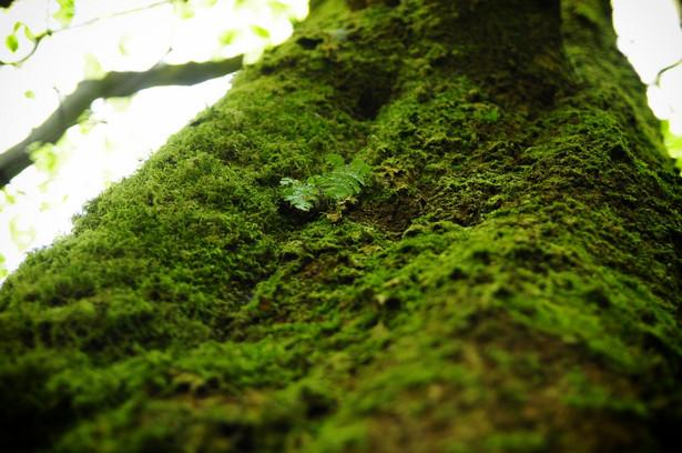 Naukowcy apelują o podjęcie działań ochronnych na pozostałościach po Puszczy Karpackiej
