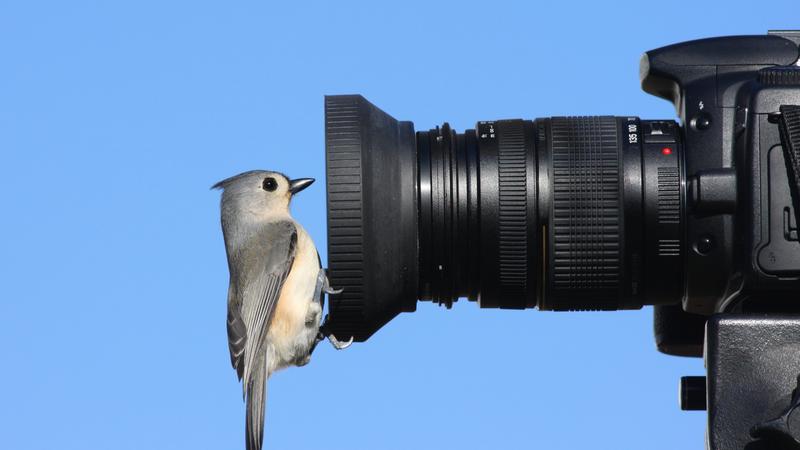 Fotografowanie ptaków