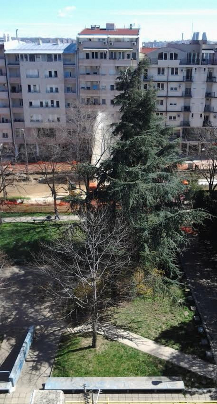 593872_gejzir-vojvode-stepe-02-foto-nebojsa-marisavljevic