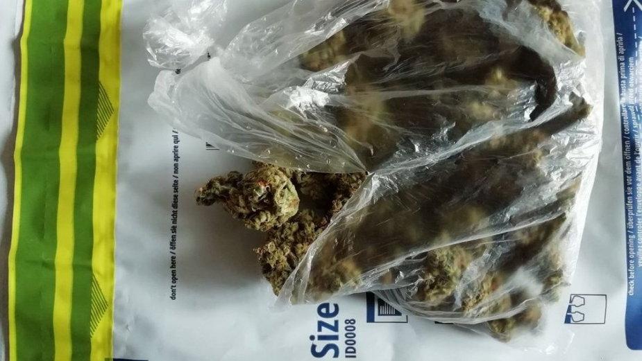 Marihuana wytropiona przez policyjnego owczarka belgijskiego