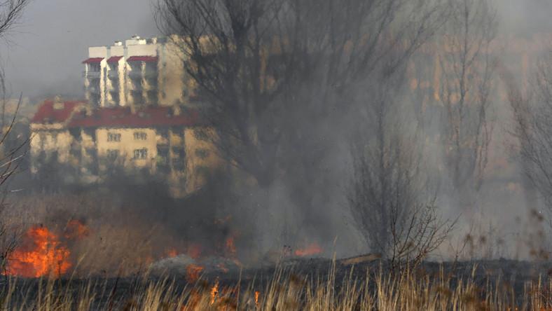 W całej Polsce rozpoczęło się wiosenne wypalanie traw. Tysiące zwierząt zginą w płomieniach