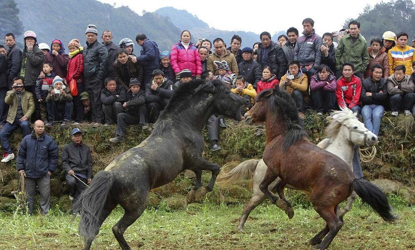Walki koni w Chinach