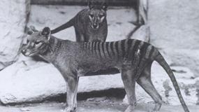 Nieuchwytny australijski ssak jednak żyje?