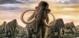 Znalazłem kieł mamuta! WIDEO