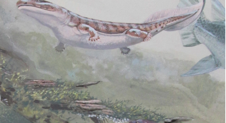 Illustration of the newly described lungfish Isityumzi (lower right) and other Late Devonian freshwater ecosystem creatures including an early tetrapod (Unzantsia) by South African earth sciences illustrator Maggie Newman.