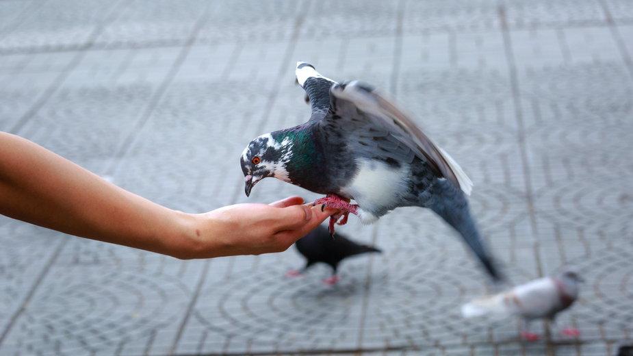 Dokarmianie ptaków pieczywem