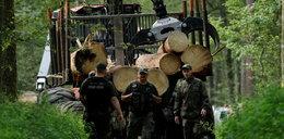 Skandaliczna interwencja strażników w Białowieży
