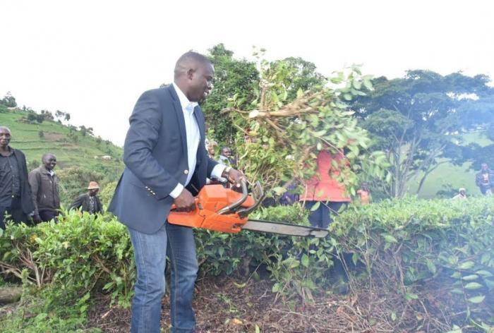 Nandi Governor Stephen Sang leading residents in cutting and uprooting tea on the disputed piece of land on 7 June 2019