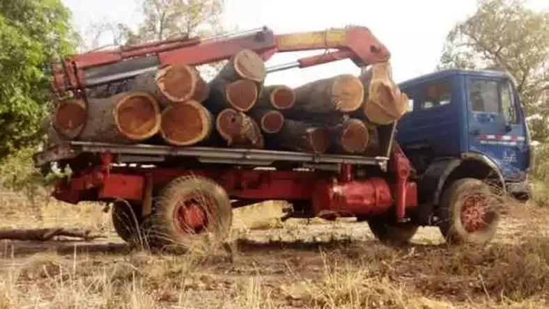 Police impounds 2 trucks of rosewood belonging to another Chinese national