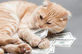 Kot jako środek trwały, czyli pięć nietypowych kosztów firmowych