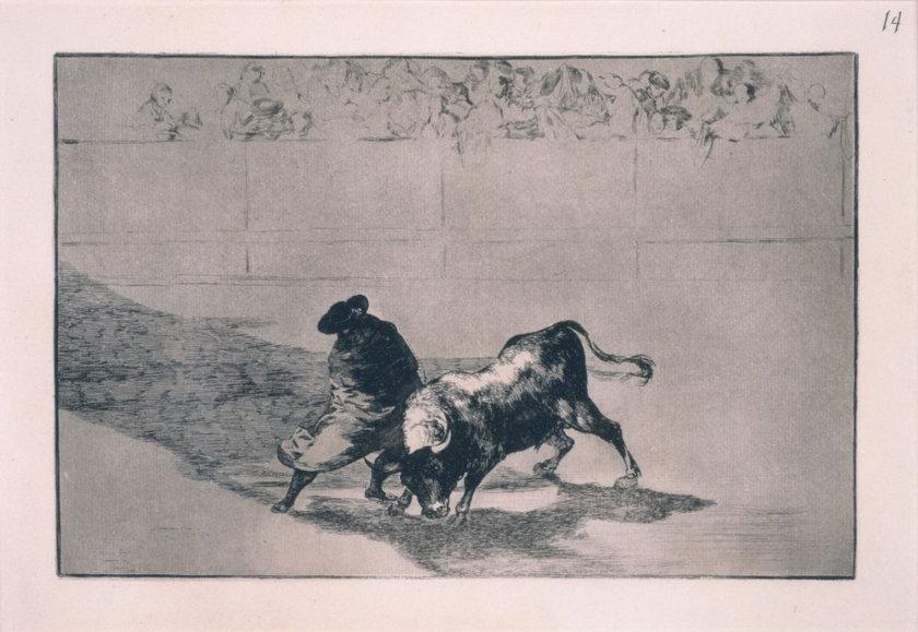 Francisco de Goya, Zręczny  student z Falces, owinięty w płaszcz, wyprowadza byka w pole swymi unikami, 1814-1816, z cyklu: Tauromachia, akwaforta, akwatinta i sucha igła,29,9 x 40,7 cm, edycja: 1937, kolekcja Art Camu, Sardynia