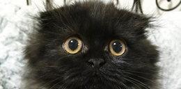 Co jest nie tak z tym kotem?