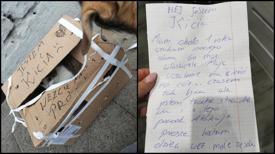 Roczna kotka wyrzucona w kartonie fot. Sandra Szostak