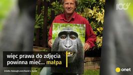 Małpa zrobiła selfie - właściciel aparatu odda część zysków