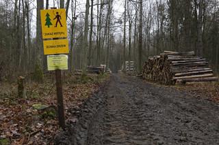 Szef Lasów Państwowych: W Puszczy Białowieskiej harwestery już nie pracują