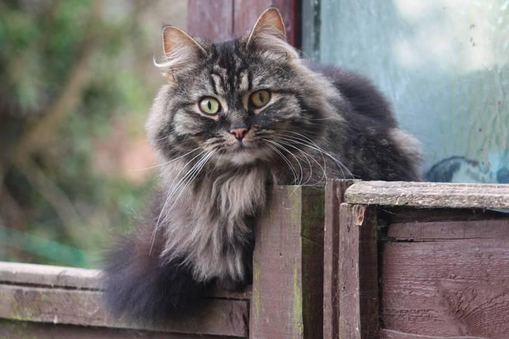 serwis randkowy uwielbia koty