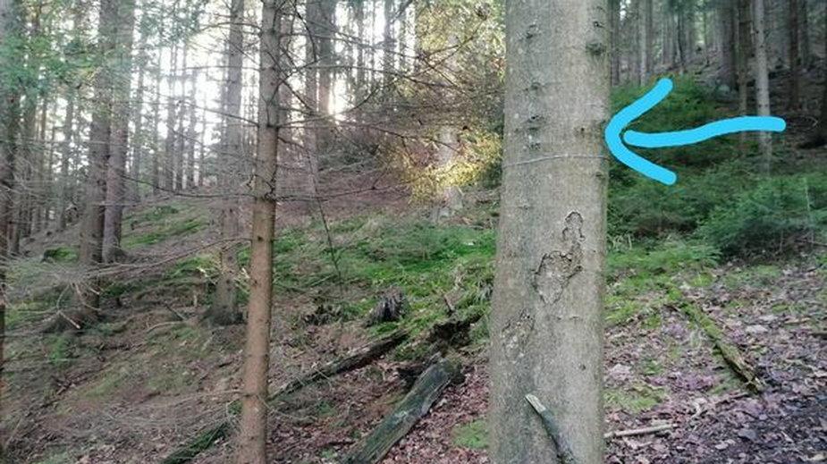Stalowe linki między drzewami w lasach