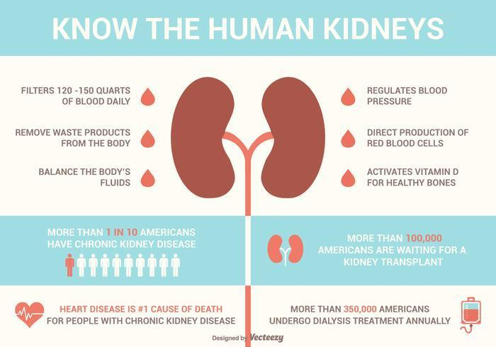 Kidney facts that you need to know on World Kidney Day 2019 [Credit: Vecteezy]