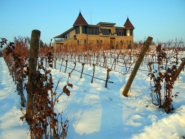 Winnica pod śniegiem