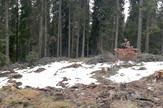 Posečena šuma na Kopaoniku