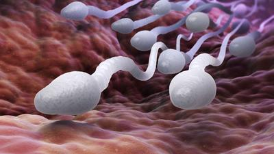 Male Infertility: Here's how to make your sperm stronger, faster and more fertile