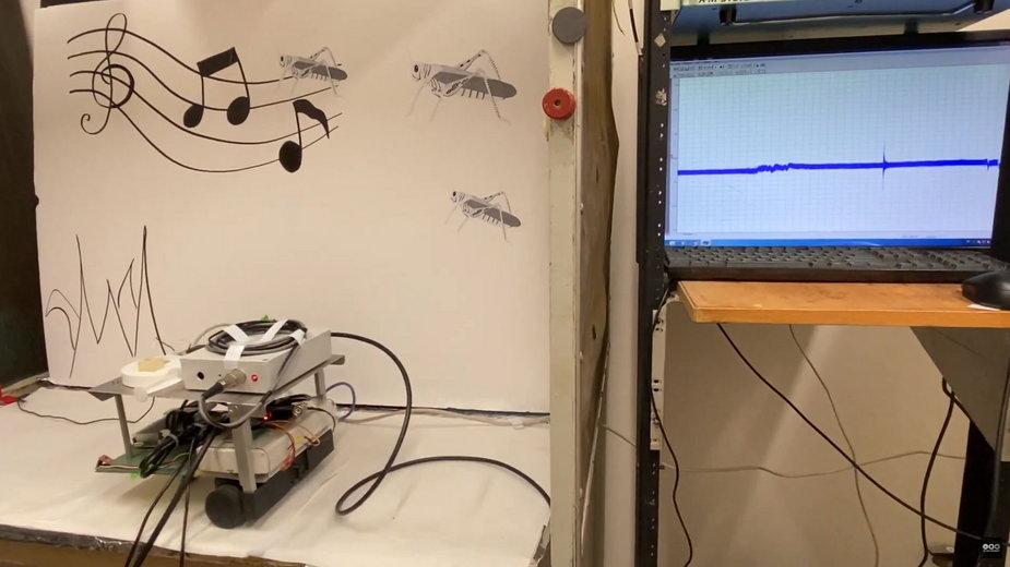 Robot, który słyszy za pomocą... ucha szarańczy