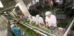 Rewolucja w produkcji jedzenia! Nad tym pracują Polacy...