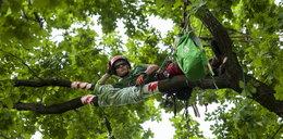 Katowice: Zawody we wspinaczce na drzewa