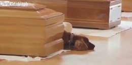 Pies wiernie czuwa przy trumnie właściciela