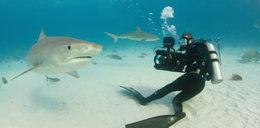 Postrach oceanów – żarłacz tygrysi. Ten rekin atakuje nocą!