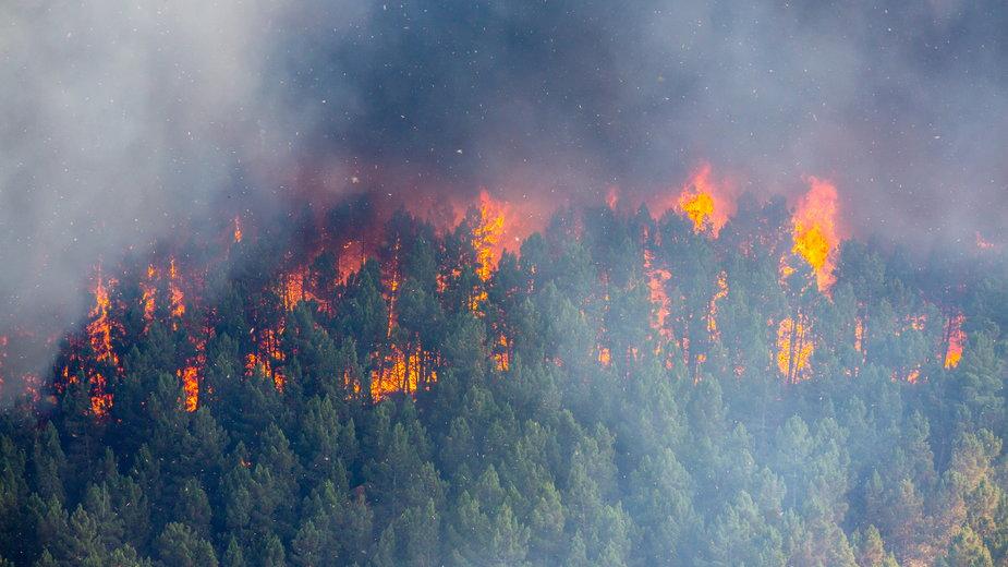 Pożar lasów (Zdjęcie ilustracyjne)