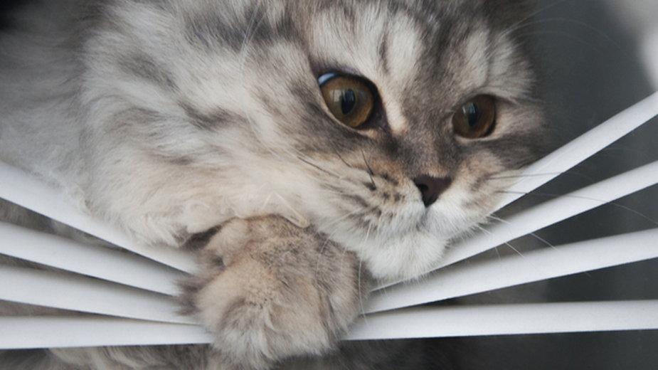 Pięć drobnych rzeczy, które naprawdę psują humor twojemu kotu