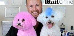 Gwiazdy farbują psy. Głupota roku?