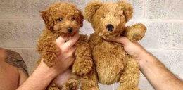 Niesamowite! Te psy są podobne do...