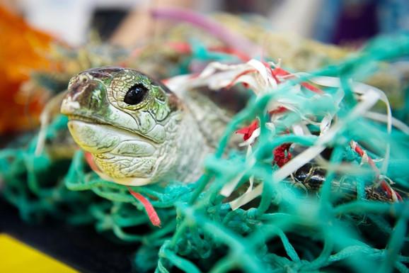 Kornjača zaglavljena u plastičnom otpadu
