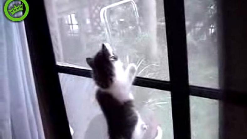 Kociaki uciekają z domu, wspinając się po szybie