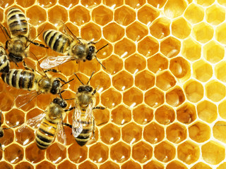 Czy pszczelarz też jest rolnikiem?