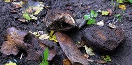 Makabryczne odkrycie w lesie