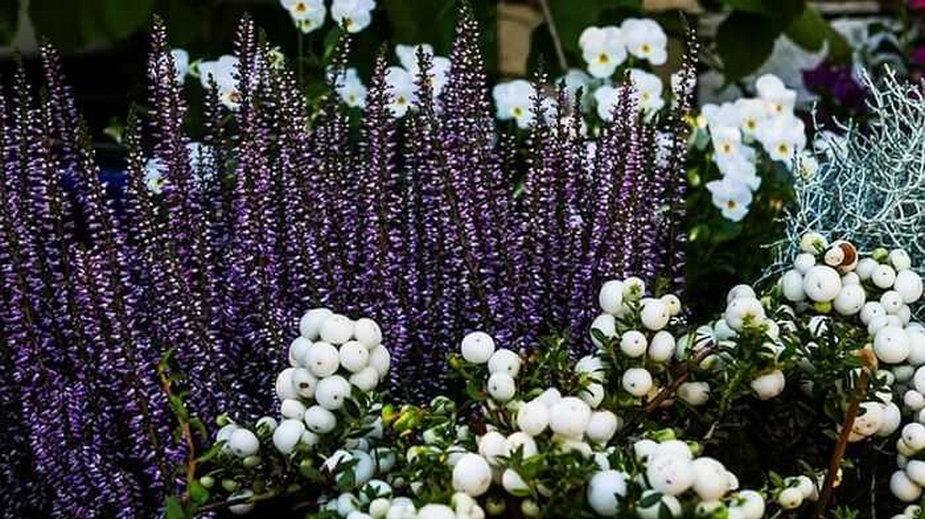 Ogród jesienią – jak zadbać, by przyciągał wzrok? Foto dgwaw/Pixabay