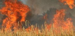 Upał. Ogień strawił 20 hektarów zboża!