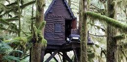 Zbudował bajkowy domek na drzewie, by robić tam straszne rzeczy