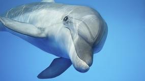 Kobieta upuściła telefon do wody. Odzyskała go dzięki... delfinowi