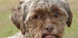 Pies o twarzy człowieka