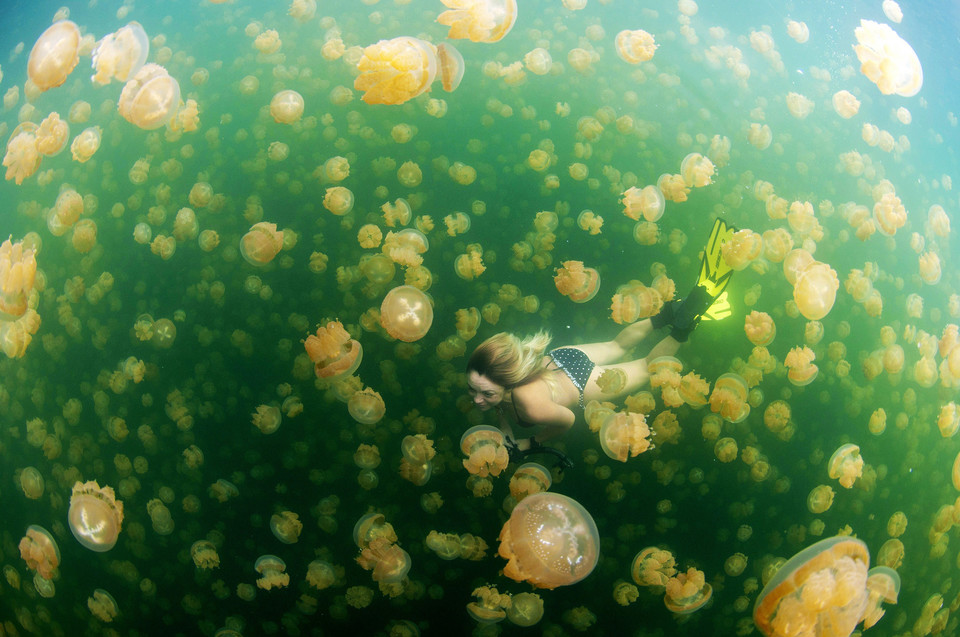 Swim with Jelly Fish (pol. Kąpiel z meduzami) - CheanChong Lim/National Geographic Traveler Photo Contest