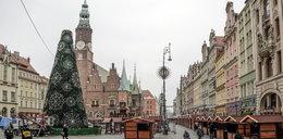 Choinka już stoi na wrocławskim Rynku!