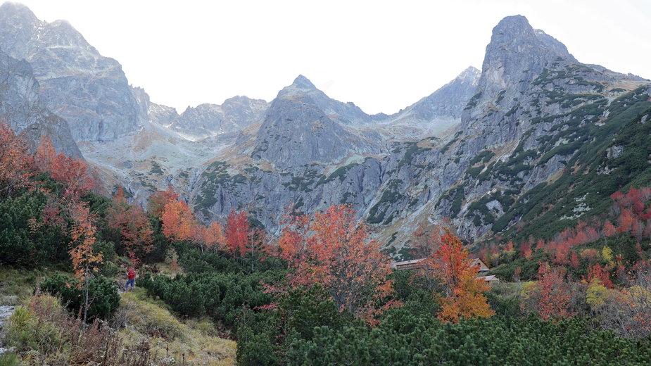 Spadł śnieg; w Tatrach mróz