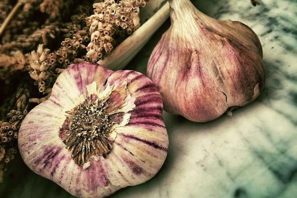 Garlic has antibacterial, antiviral and antifungal properties [Pulse Nigeria]