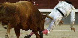 Byk wbił mu róg w cztery litery!