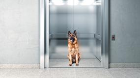 Właściciel wszedł ze smyczą do windy. Pies został na zewnątrz