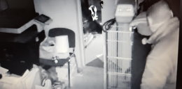 Bezczelna kradzież w azylu dla zwierząt. Dali złodziejowi ultimatum